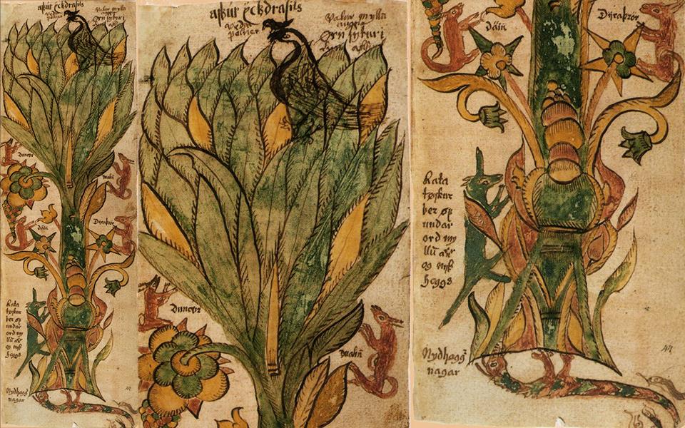 Иггдрасиль - дерево жизни в старинной рукописи XII века
